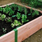 Build a Raised Garden ($100)